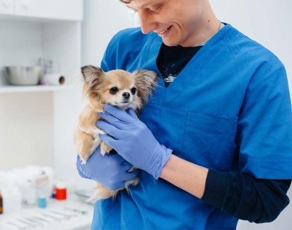 Estudia ahora el curso auxiliar técnico veterinario