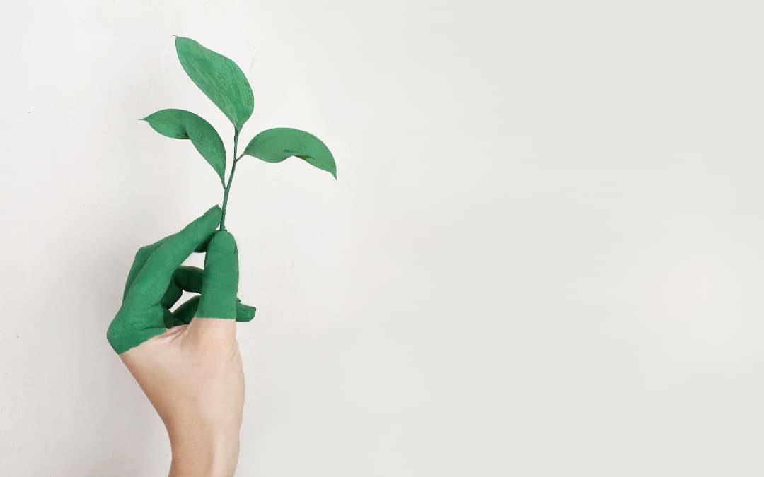 la importancia de establezer una buena política ambiental